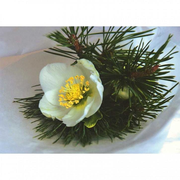 Doppelkarte - Blume Weihnachten