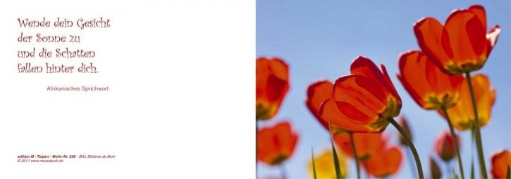 238 Tulpen