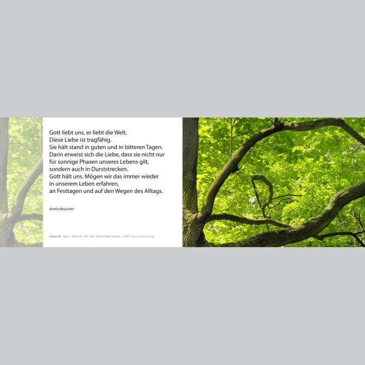 240 Baum